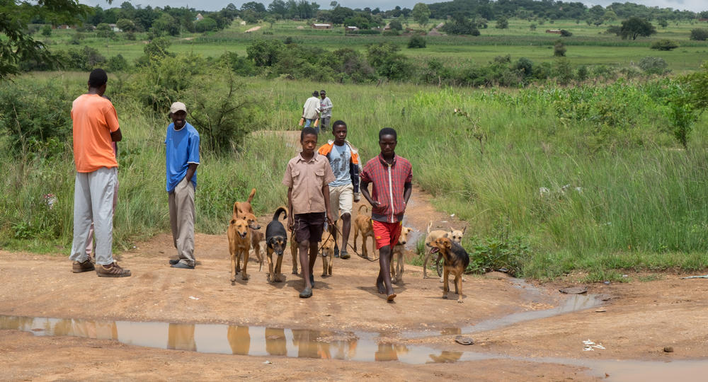 Children walking with dogs to rabies vaccination point. Global Alliance for Rabies Control (GARC)