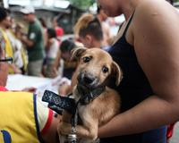 GARC driven mass dog vaccination to eliminate rabies, Philippines