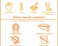 A GARC Infographic depicting the various symptoms of rabies in humans.
