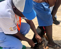 GARC's #3ToBeFree campaign helped to vaccinate dogs in Zanzibar against rabies.