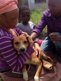 Mawethu giving rabies vaccination