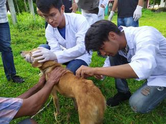 IVSA Rampur student group, GARC World Rabies Day awards nominee activities 2020, including vaccination.