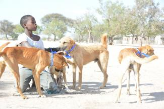 A boy relieved to have not missed the vaccination after a long journey to bring their dogs from home to the station