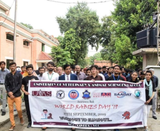 Rabies Awareness Walk at UVAS, Lahore