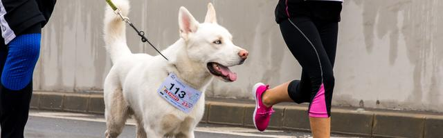 Dog running race fundraiser