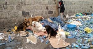 Homeless people and dogs, ethiopia