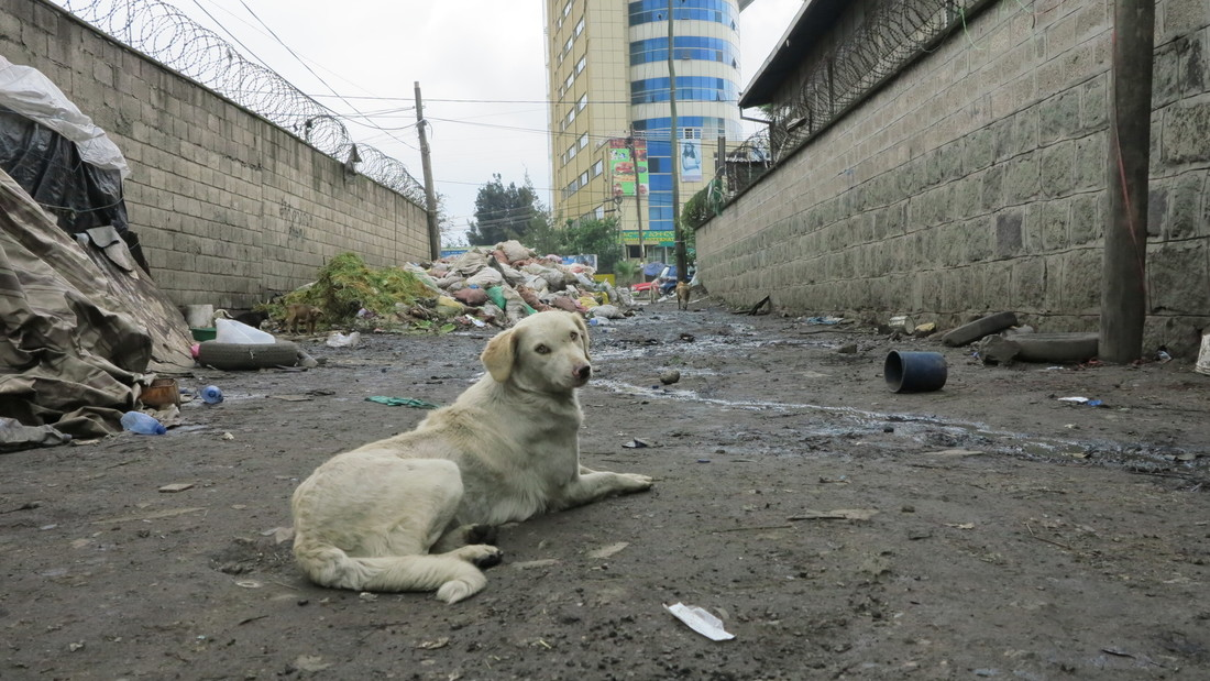 A free-roaming dog lies in a garbage-filled street.