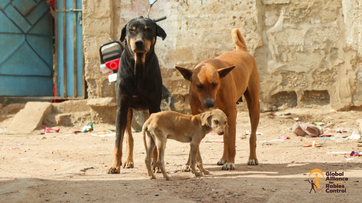 Two stray dogs and their puppy surrounded by litter